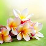 第25回「ハワイアン・ティーパーティー」